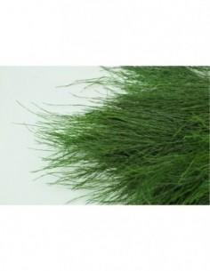 Tree fern stabilisé vert...