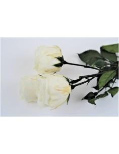 Rose éternelle bouquet...