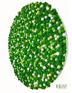 Craspédia Art végétal...