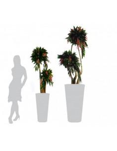Arbre bonsai cocculus...
